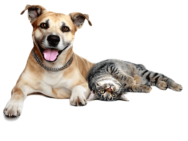 Happy dog and cat.